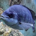 Pula Aquarium_23052010_003