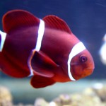Pula Aquarium_23052010_005