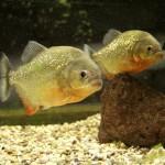 Pula Aquarium_23052010_014