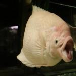 Pula Aquarium_23052010_016