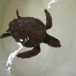 Pula Aquarium_23052010_017