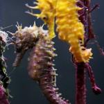 Pula Aquarium_23052010_018