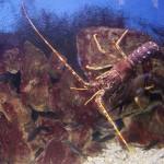 Pula Aquarium_23052010_021