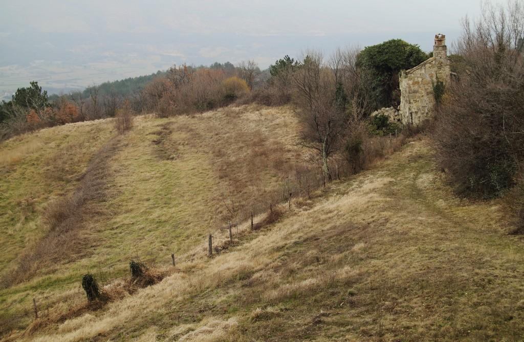 Tupaljica_20032010_004