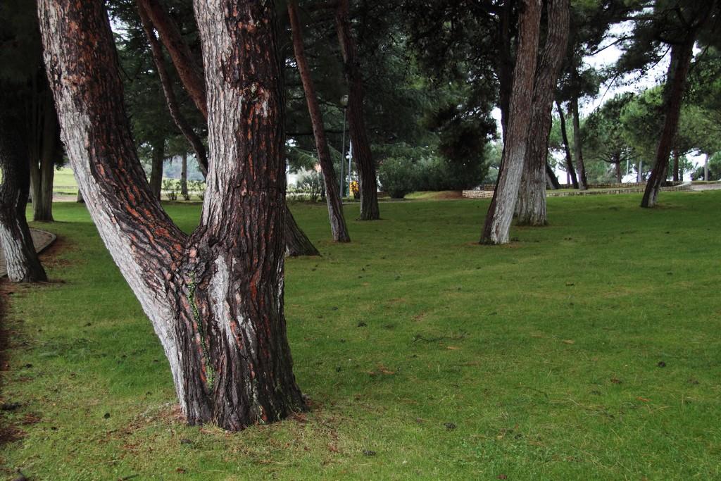 Zelena Laguna_30012010_006