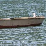 Galeb u barki