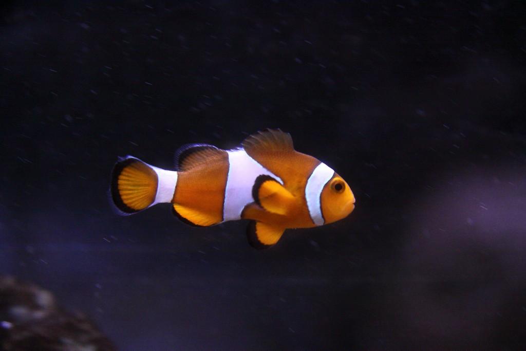 Pula Aquarium_23052010_007